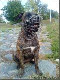 Agina zlý pes